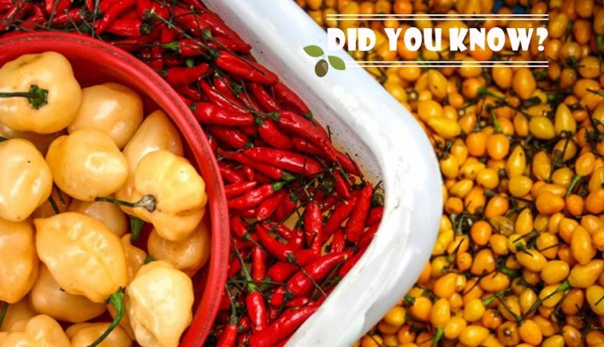 DO YOU KNOW THE 5 MOST POPULAR TYPES OF PEPPERS IN BRAZIL?